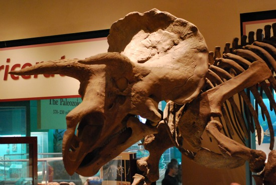 triceratops-nmnh