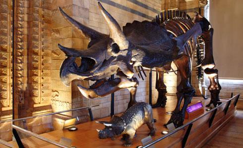 triceratops-slide-490-12251-1