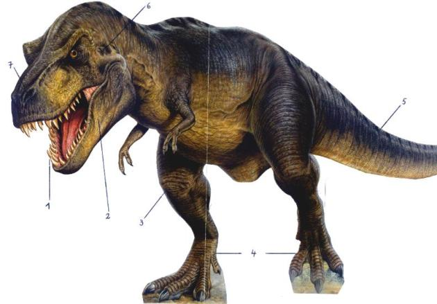 Tyrannosaurus-rex  model