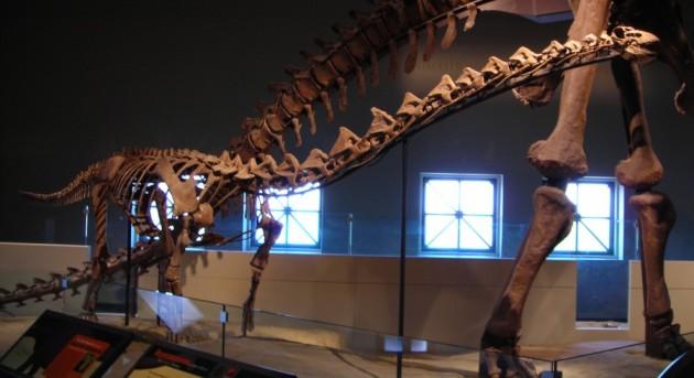 young-rapetosaurus-990x540