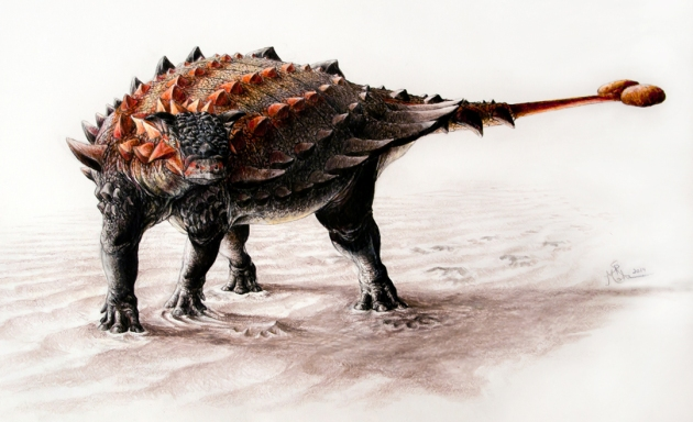 Artist's conception of the newly discovered ankylosaur,