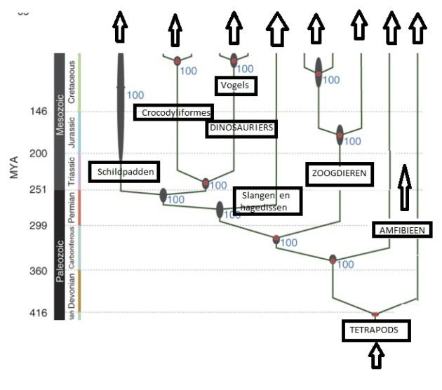 aangevuld   phylogeny  overzicht