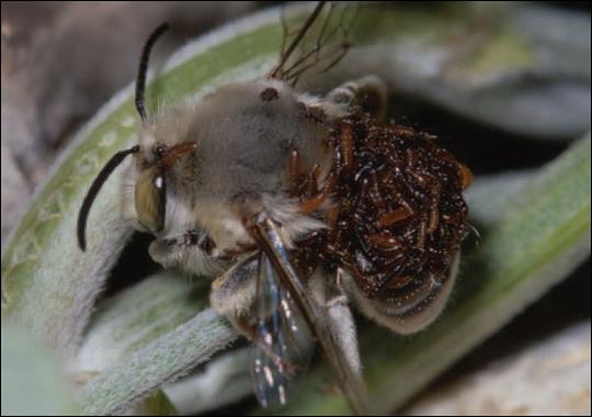 beetle-zoom