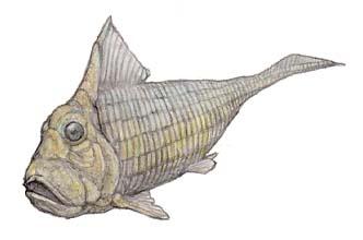 campbellodus01