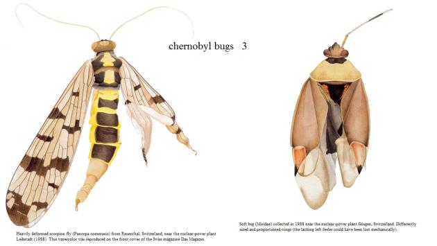 Chernobyl bugs 4