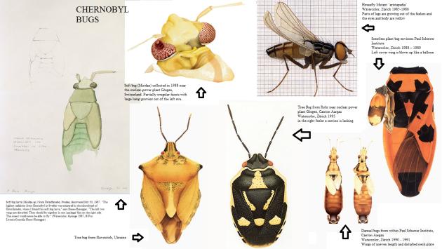 Chernobyl bugs 5