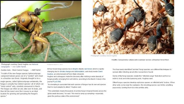 cordyceps zombie ants geographics