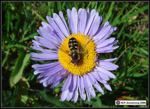 Wonderbaar Biologie | Tsjok's blog | Pagina 9 RV-97
