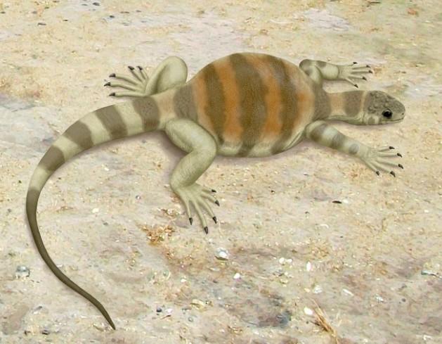 Eunotosaurus_africanus