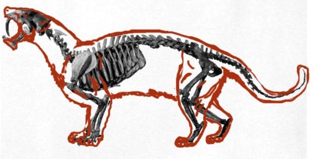 eusmilus skeleton