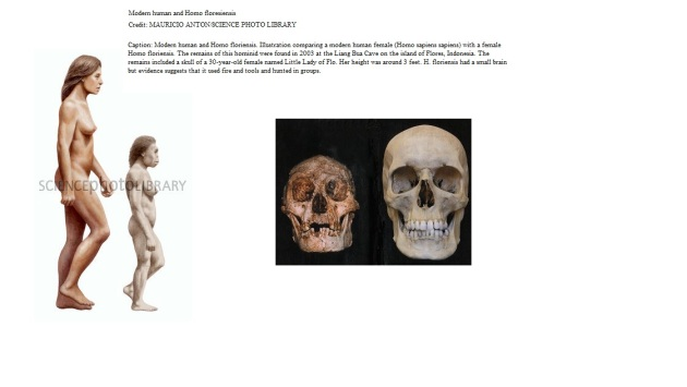 Floresiensis and modern man