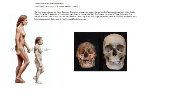 Floresiensis and modern man