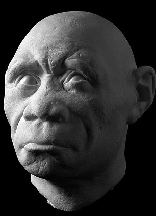 floresiensis  flo head construction