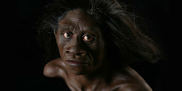 floresiensis  head reconstruction 1