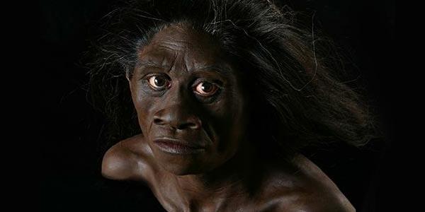 floresiensis  head reconstruction 1