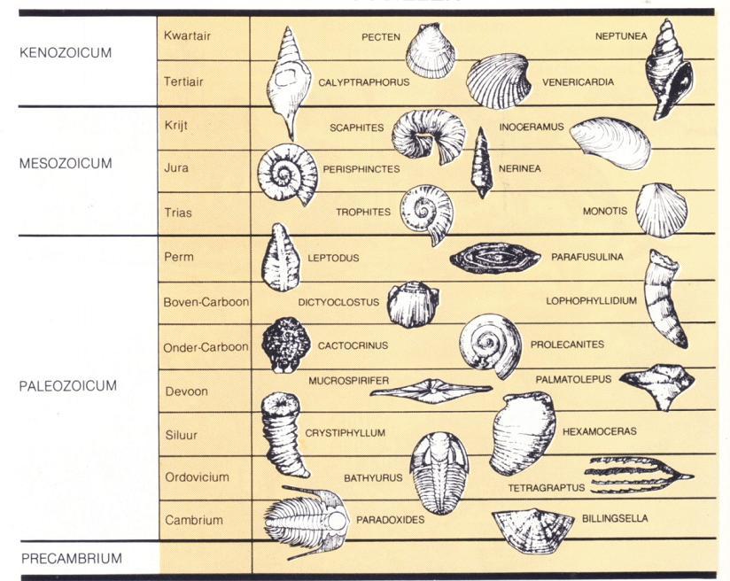 schets van de methode voor het dateren van rotsen en fossielen