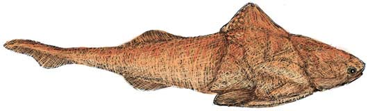 Groenlandaspis