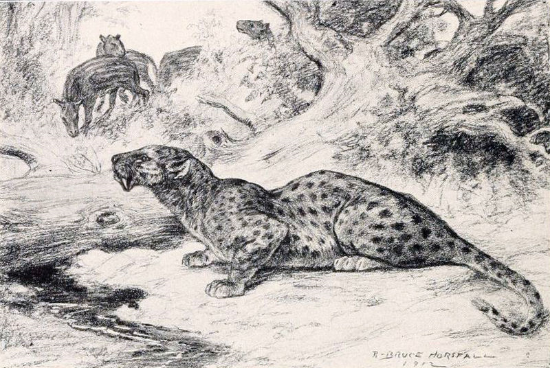 Cougar dating gedefinieerd