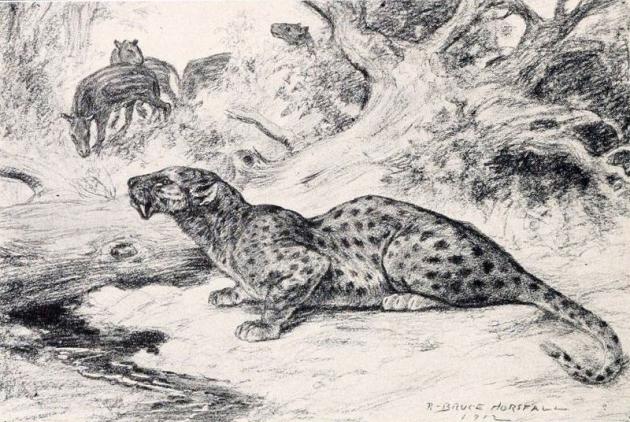 Hoplophoneus restoration