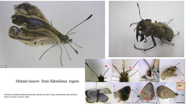 insect mutants Fukushima