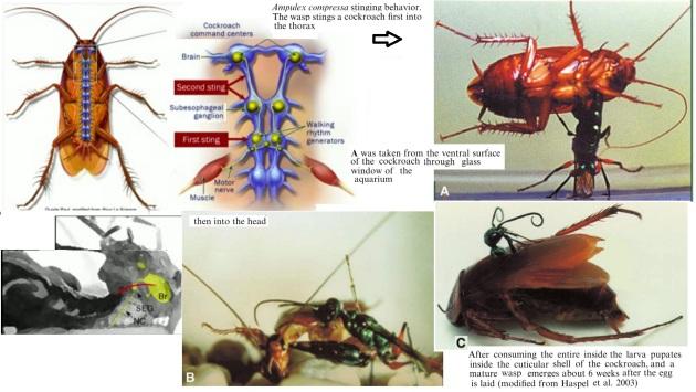 jewel wasp2