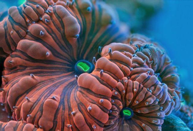koraal3-954x652
