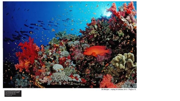 koraalrif en biodiversiteit