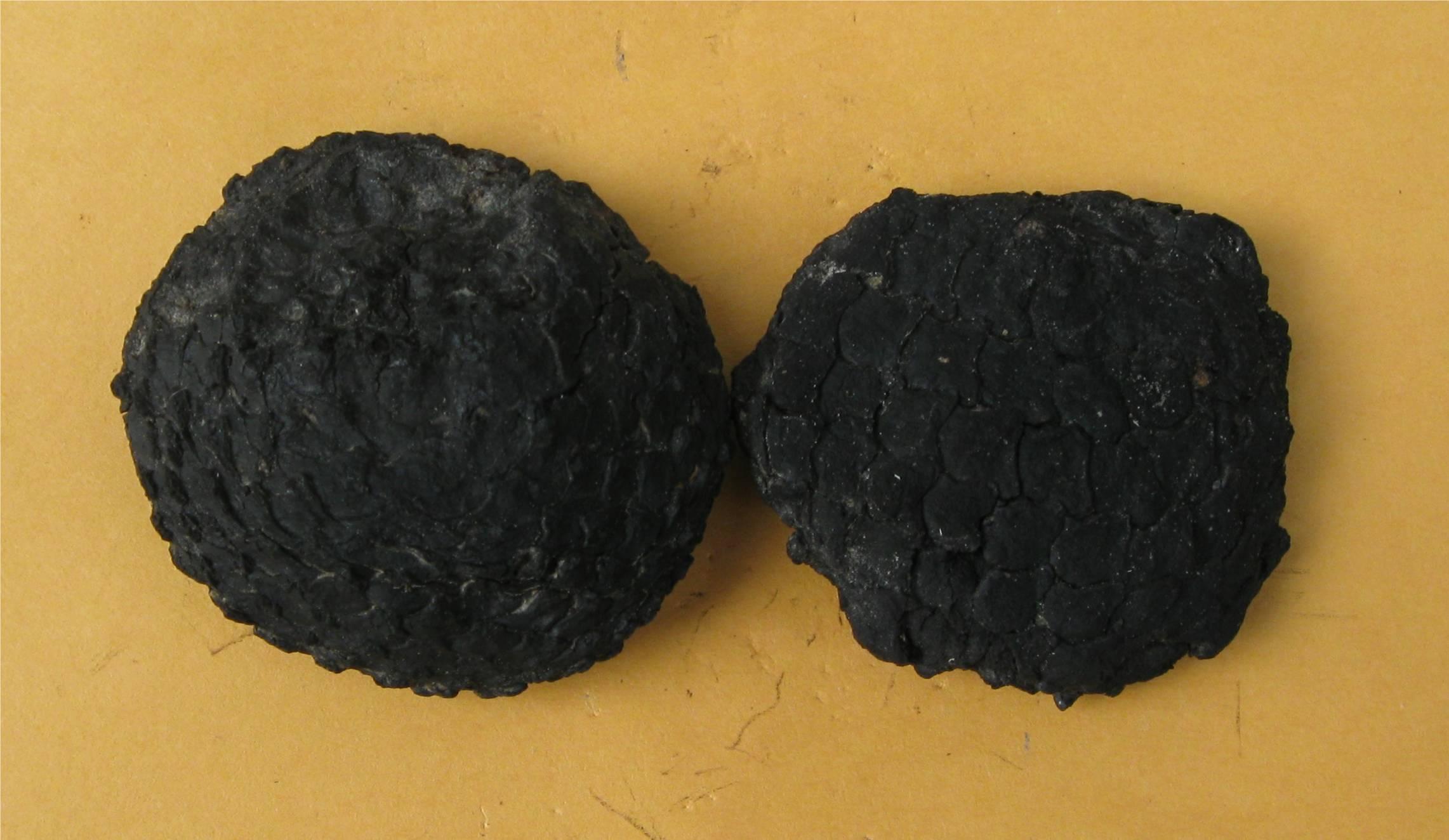 Carbon 14 de radioactieve nuclide gebruikt in dating fossielen heeft