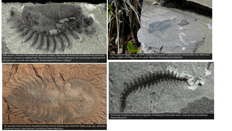 Dating rotsen en fossielen met behulp van geologic methoden man begon dating iemand anders