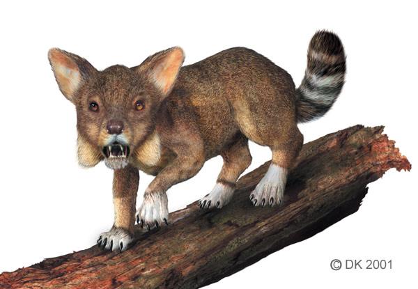Puma messen dating van de drie methoden voor het dateren van de aarde hoeveel zijn nauwkeurig