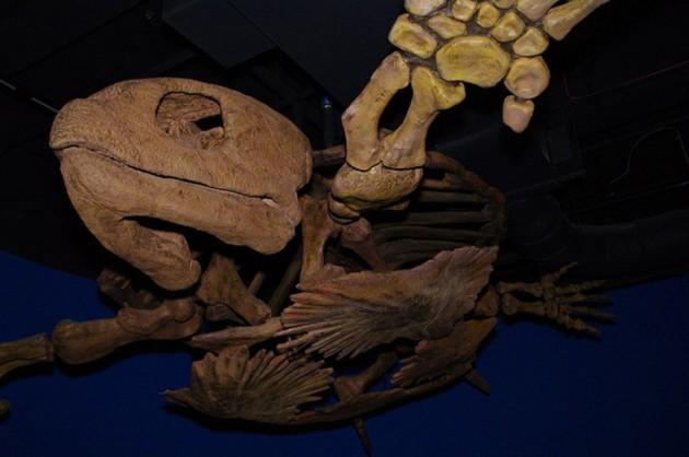 Protostega-gigas-marine-turtle--940x624