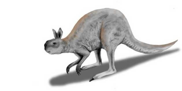 Mioceen