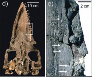 balein en tanden