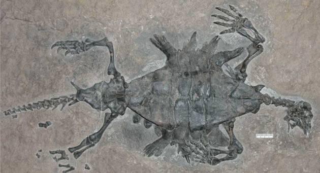 turtle4.massive