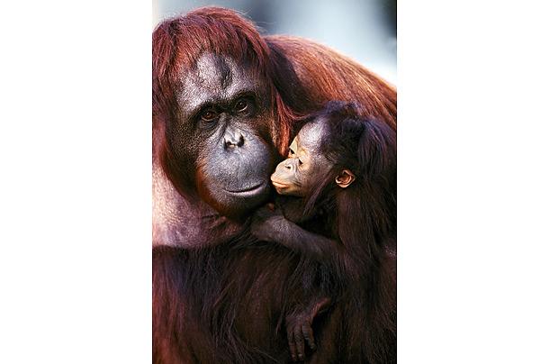 8917570-primates-01