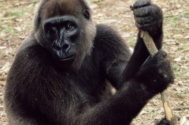 8918180-primates-10