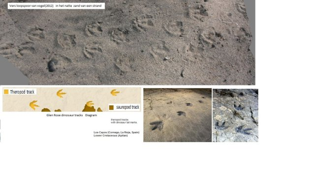 Bird-theropods-trails-