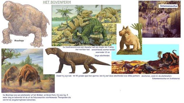 bovenperm-zoogdieren-1