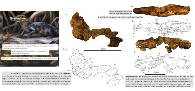 Culebrasuchus mesoamericanus