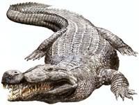 deinosuchus (1)