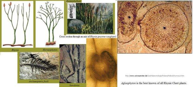 Devoon-planten