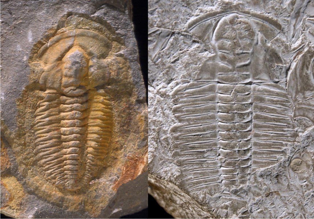 Carbon is nuttig voor het daten van fossielen die