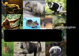 euarchonto1
