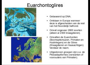 euarchonto2