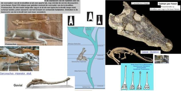 extant-crocs