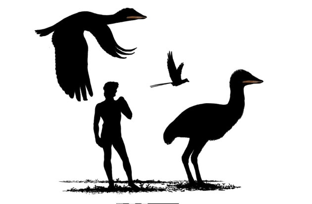 giant-bird-size