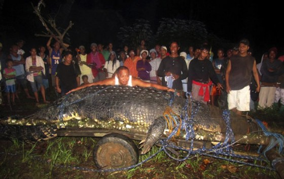 Giant-Crocodile-in-the-Philippines