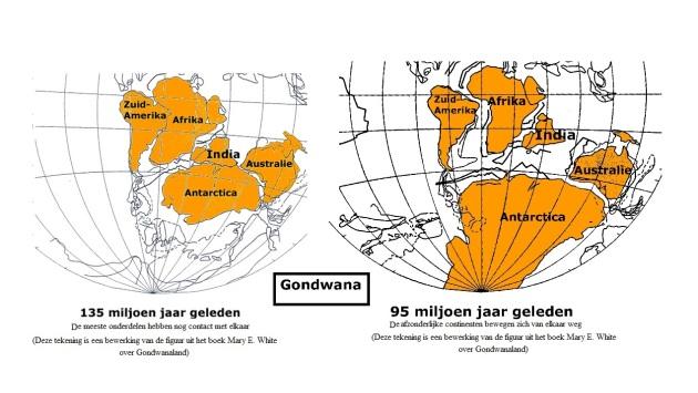 Gondwana en zaadplanten
