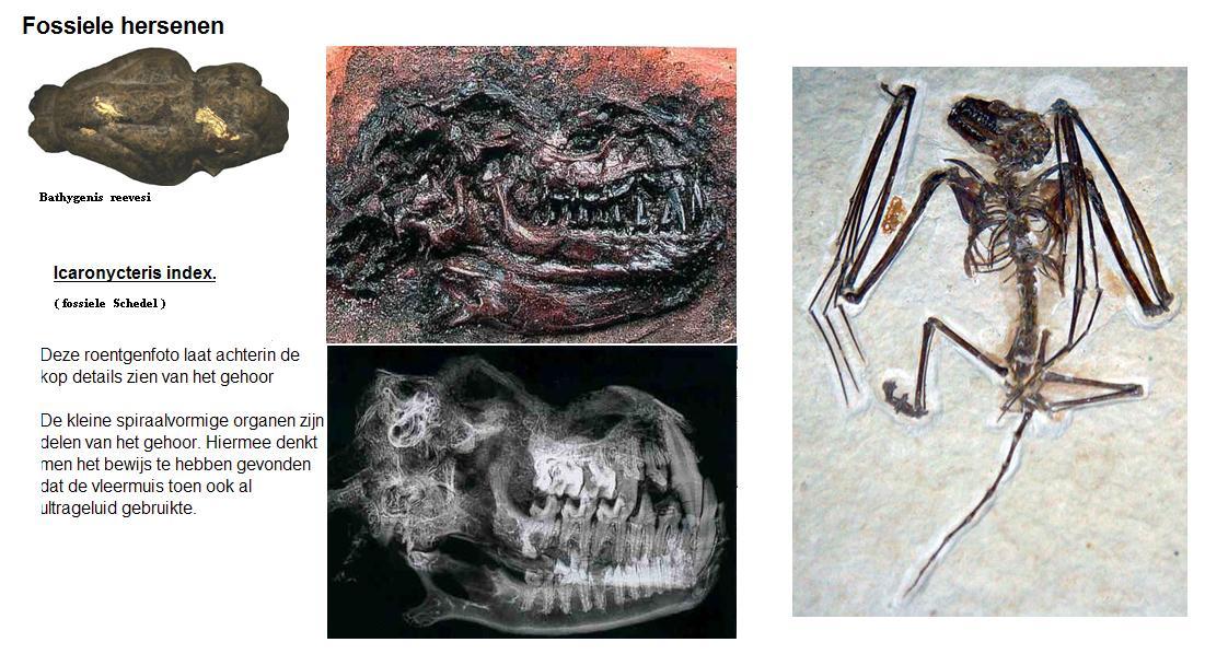 index fossielen worden gebruikt in welk type van dating