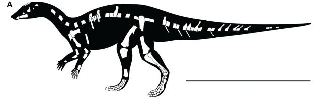 kaiparowits-ornithopod